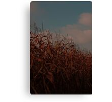 evening cornfield and retro skies Canvas Print