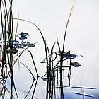 The Glass Pearls on the Leaves.....Monastery Lake by Imi Koetz