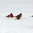Cardinal by DebbieCHayes