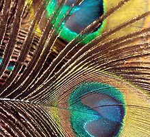 Peacock Feathers by WendyJC