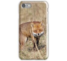 Red Fox (Vulpes vulpes) iPhone Case/Skin