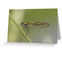 Female Banded demoiselle (Calopteryx splendens) Greeting Card