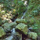The Rainforest Stream, Dorrigo National Park by Adrian Paul