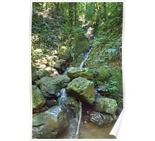 The Rainforest Stream, Dorrigo National Park Poster