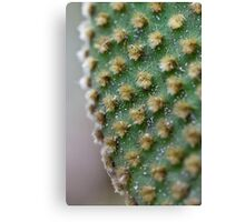 Up Close and Thorny Canvas Print