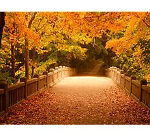 Bridging the colors by Tracy Jule Photographic Print