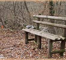 bench in the woods by spetenfia