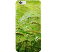 Barley in sunshine iPhone Case/Skin
