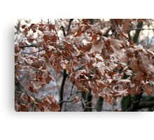 dry leaves on the tree Canvas Print