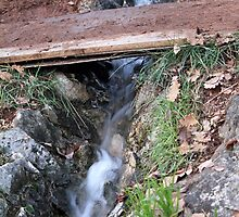 source of the stream in the woods by spetenfia