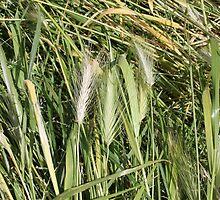 field of spikes by spetenfia