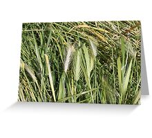 field of spikes Greeting Card