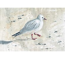She sells seagulls on the seashore Photographic Print