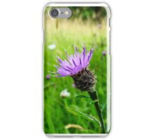 Lesser Knapweed in wildflower field iPhone Case/Skin