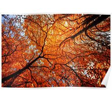 Sky Roots in Forest Red Poster