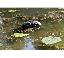 turtles on lake Photographic Print
