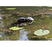 turtles on lake Photographic Print