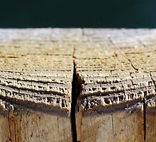 Weathered Wood Piling by Gilda Axelrod