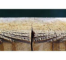 Weathered Wood Piling Photographic Print