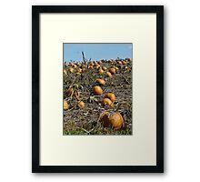 Plenty o pumpkins Framed Print