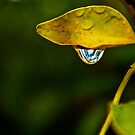 Morning Raindrop by Debbie-anne