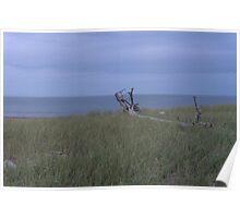 Fallen at the Beach Poster