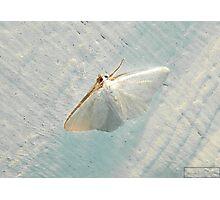 Moon Lit Moth Photographic Print