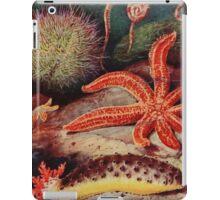 Echinoderms - The Starfish iPad Case/Skin