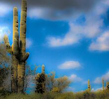 Palo Verde and Saguaro by Roger Passman