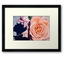 Rose Splendour Framed Print