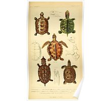 The Animal Kingdom by Georges Cuvier, PA Latreille, and Henry McMurtrie 1834  002 - Reptilia Reptiles Poster
