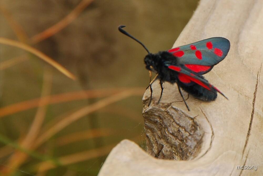 Five-spot Burnet Moth by Mary Carol Story