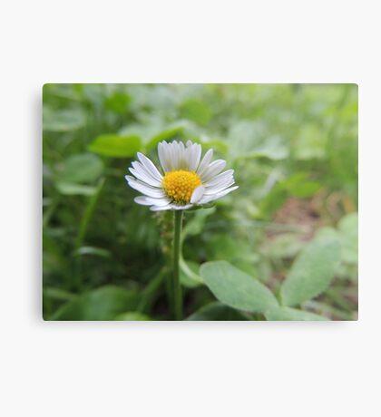 Flower #5 Metal Print