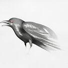 black crow by federico cortese