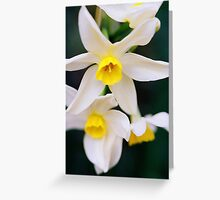 White Jonquils Up Close Greeting Card