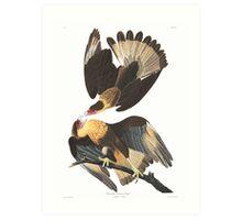 Caracara Eagle - John James Audubon  Art Print
