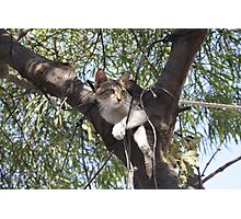 Bi-Color Tabby Cat In Tree Photographic Print