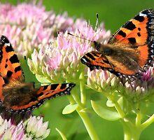 Beautiful butterflies by missmoneypenny
