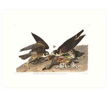 Peregrine Falcon - John James Audubon  Art Print
