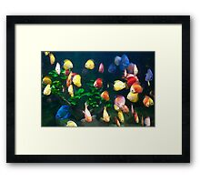 Colourful Fish In A Tank Framed Print