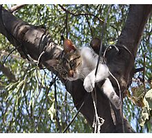 Bi-Color Tabby Cat In Tree 4 Photographic Print