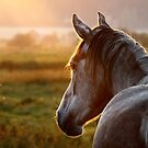 10.9.2014: Horse on Pasture at September Evening III by Petri Volanen