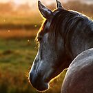 10.9.2014: Horse on Pasture at September Evening IV by Petri Volanen