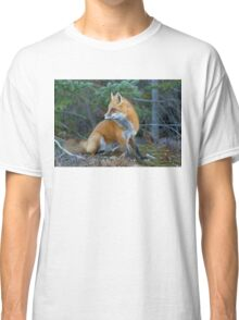 Red fox in Algonquin Park Classic T-Shirt