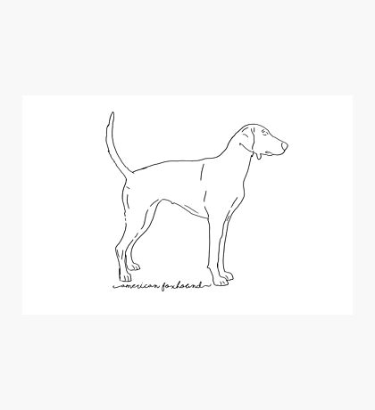 American Foxhound sketch  Photographic Print