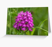 Pyramidal Orchid flower (Anacamptis pyramidalis) close-up Greeting Card