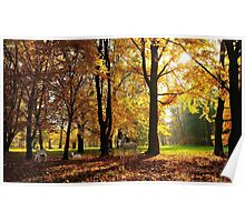 Deer in Autumn Forest Poster