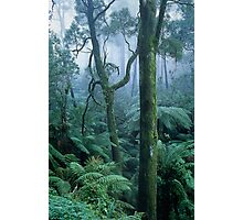 Winter Morning on Mount Dandenong Photographic Print