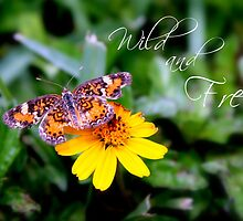 Wild and Free Butterfly by kfisi