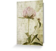 Peony No.3 Greeting Card